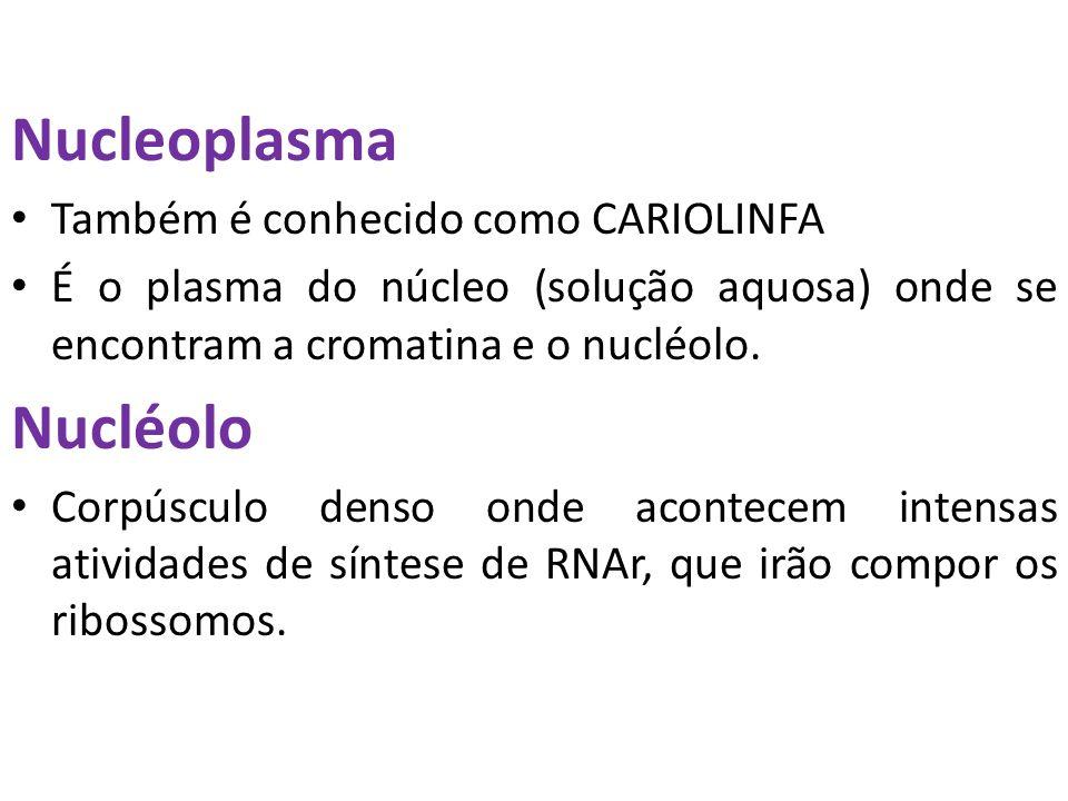 Nucleoplasma Nucléolo Também é conhecido como CARIOLINFA