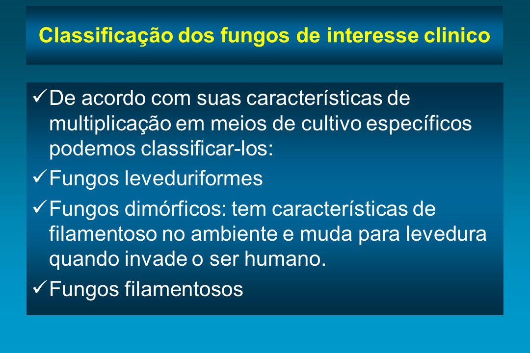 Classificação dos fungos de interesse clinico