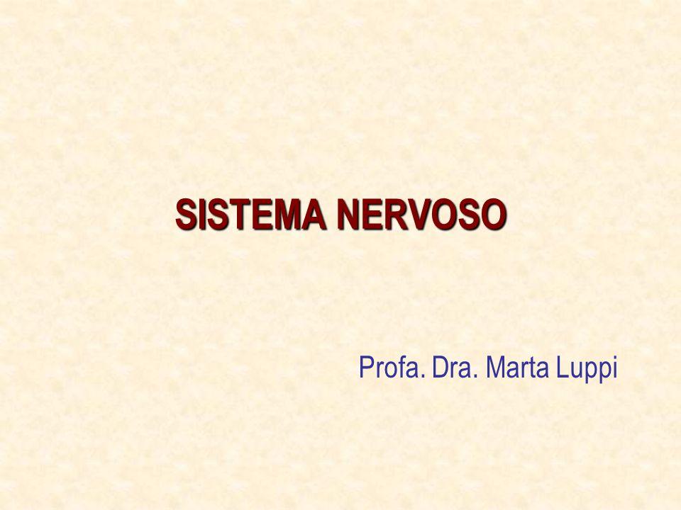 SISTEMA NERVOSO Profa. Dra. Marta Luppi