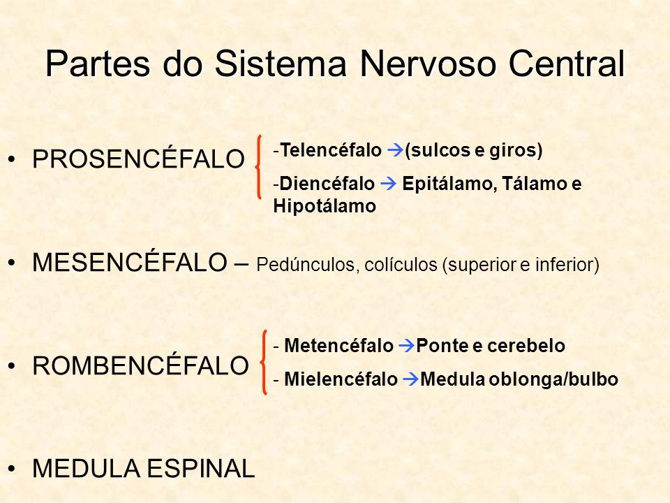 Partes do Sistema Nervoso Central