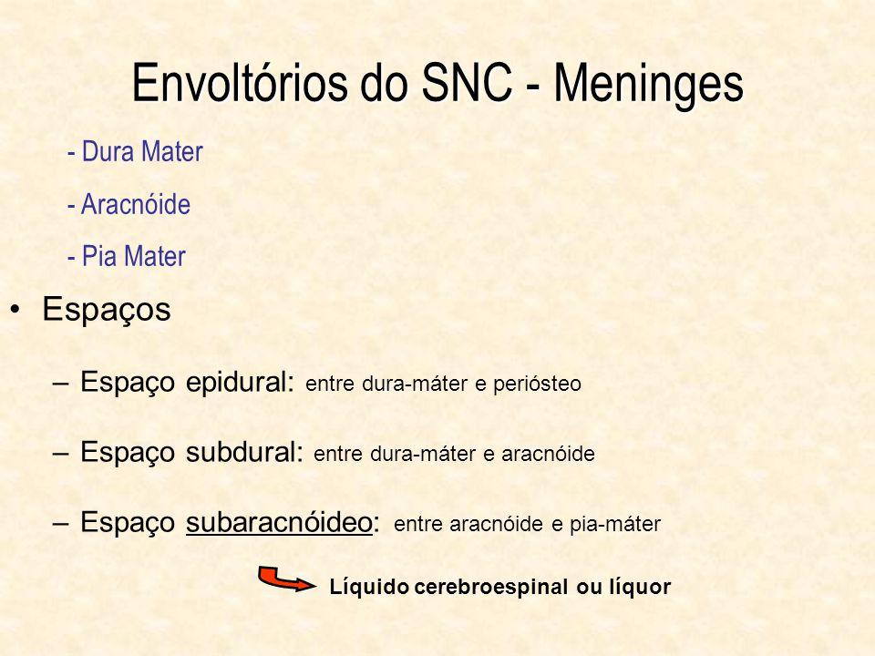 Envoltórios do SNC - Meninges