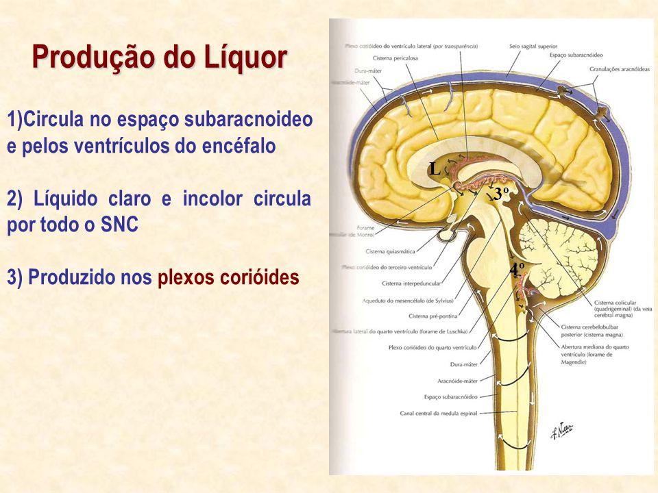 Produção do Líquor 1)Circula no espaço subaracnoideo e pelos ventrículos do encéfalo. 2) Líquido claro e incolor circula por todo o SNC.