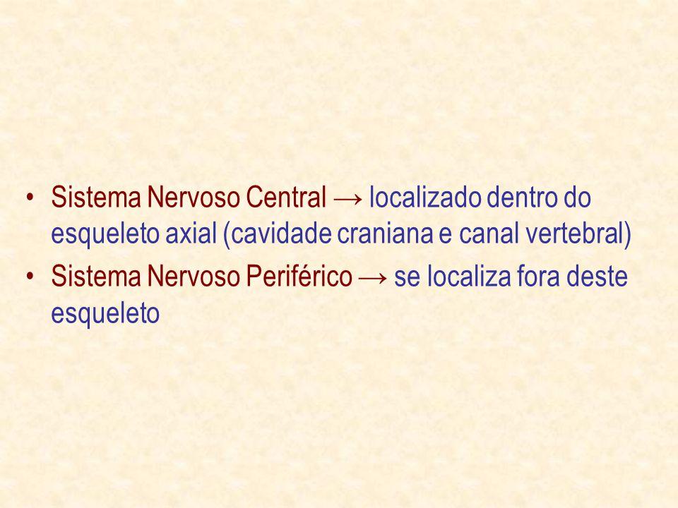 Sistema Nervoso Central → localizado dentro do esqueleto axial (cavidade craniana e canal vertebral)