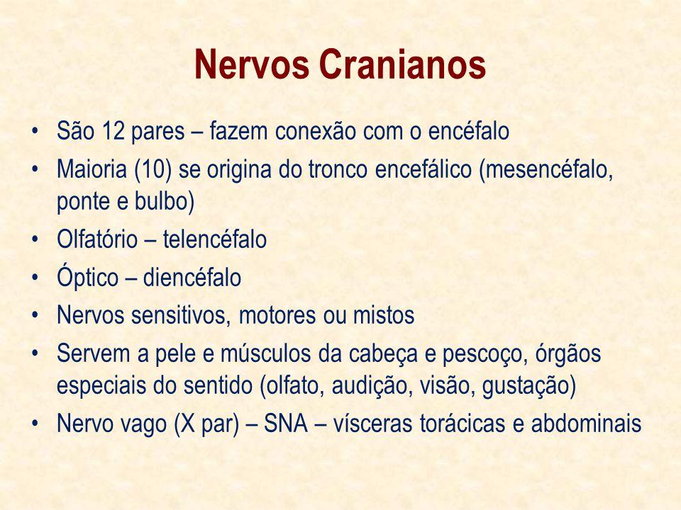 Nervos Cranianos São 12 pares – fazem conexão com o encéfalo