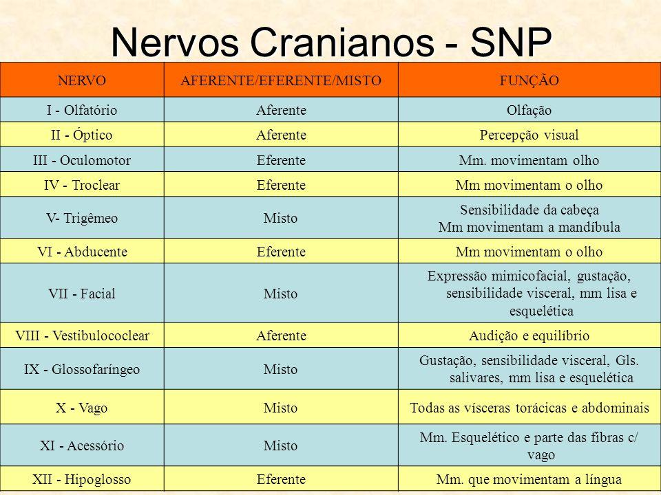 Nervos Cranianos - SNP NERVO AFERENTE/EFERENTE/MISTO FUNÇÃO