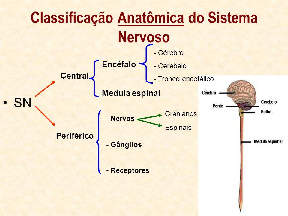 Classificação Anatômica do Sistema Nervoso