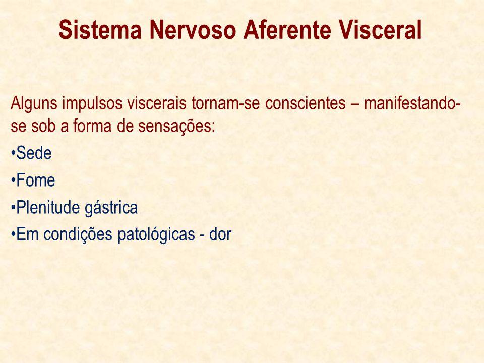 Sistema Nervoso Aferente Visceral