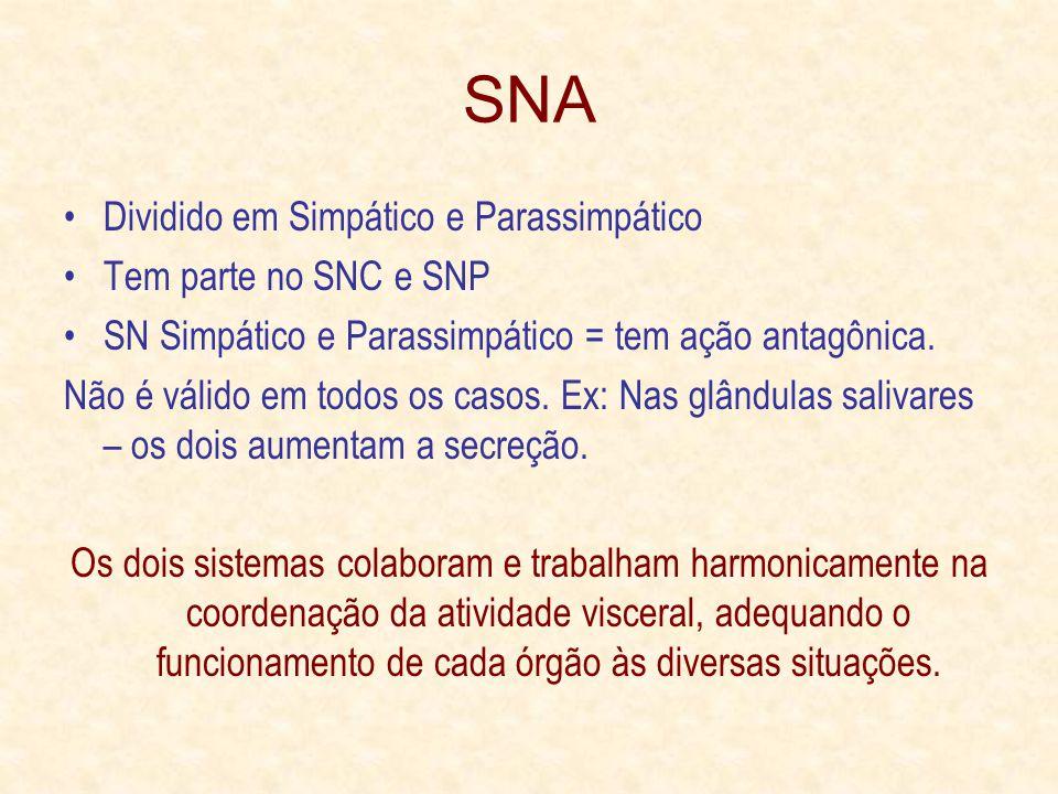 SNA Dividido em Simpático e Parassimpático Tem parte no SNC e SNP