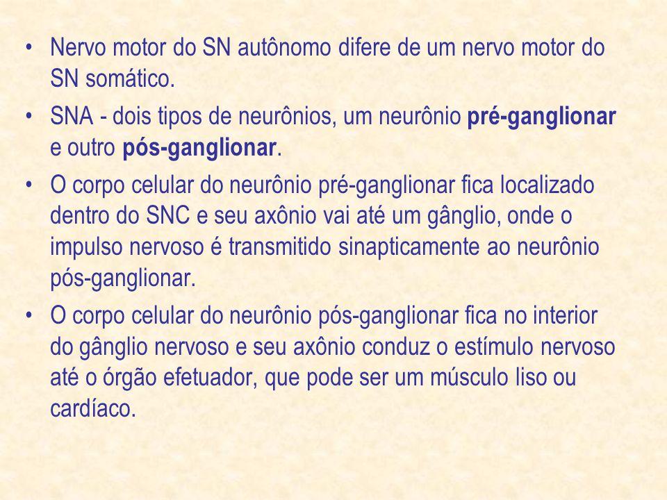 Nervo motor do SN autônomo difere de um nervo motor do SN somático.
