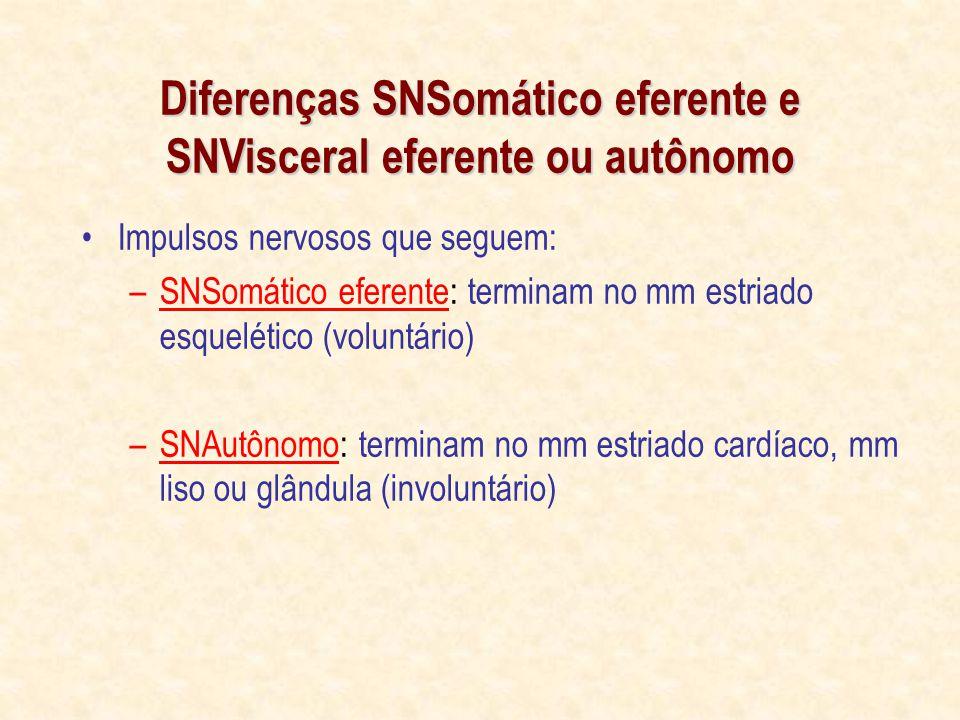 Diferenças SNSomático eferente e SNVisceral eferente ou autônomo