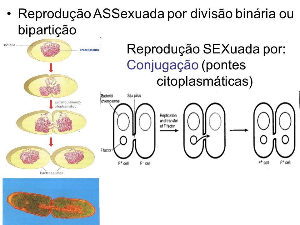 Reprodução ASSexuada por divisão binária ou bipartição