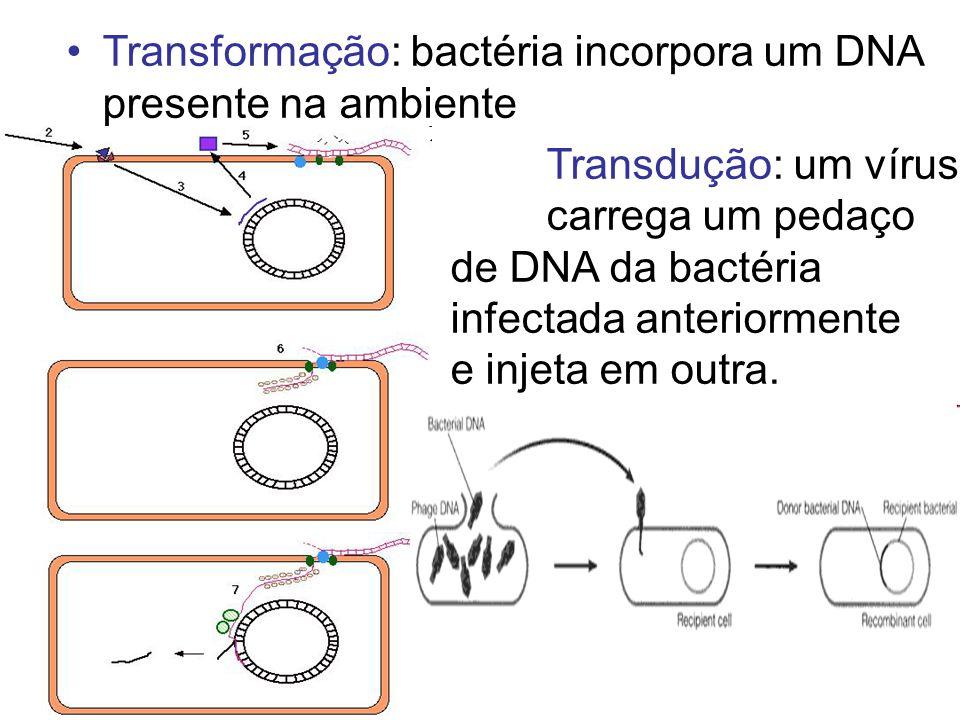 Transformação: bactéria incorpora um DNA presente na ambiente