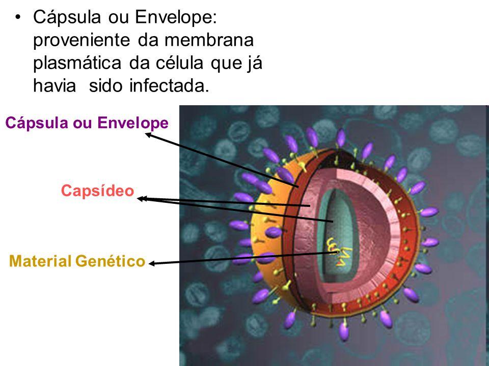 Cápsula ou Envelope: proveniente da membrana plasmática da célula que já havia sido infectada.