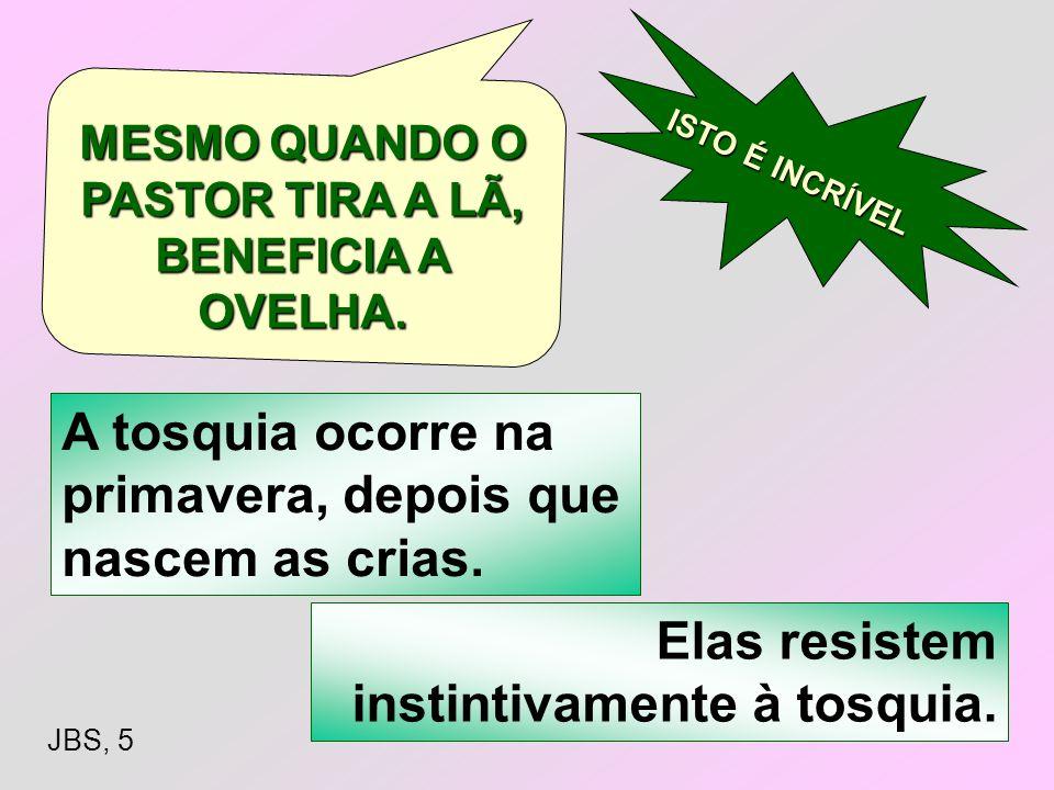 MESMO QUANDO O PASTOR TIRA A LÃ, BENEFICIA A OVELHA.