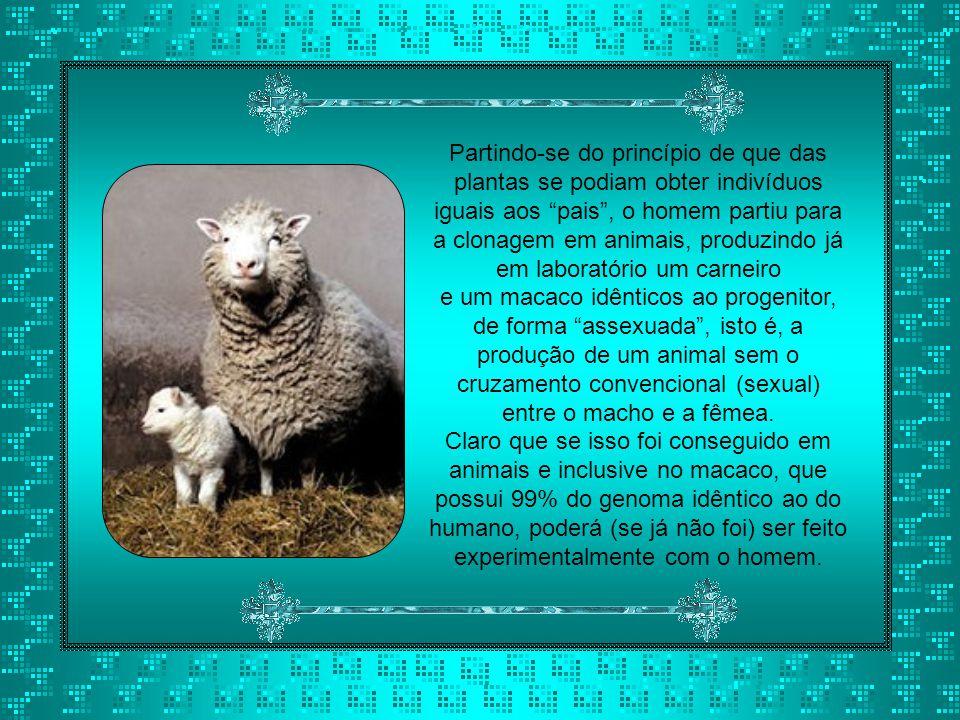 Partindo-se do princípio de que das plantas se podiam obter indivíduos iguais aos pais , o homem partiu para a clonagem em animais, produzindo já em laboratório um carneiro
