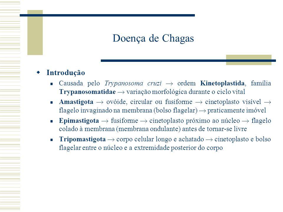 Doença de Chagas Introdução