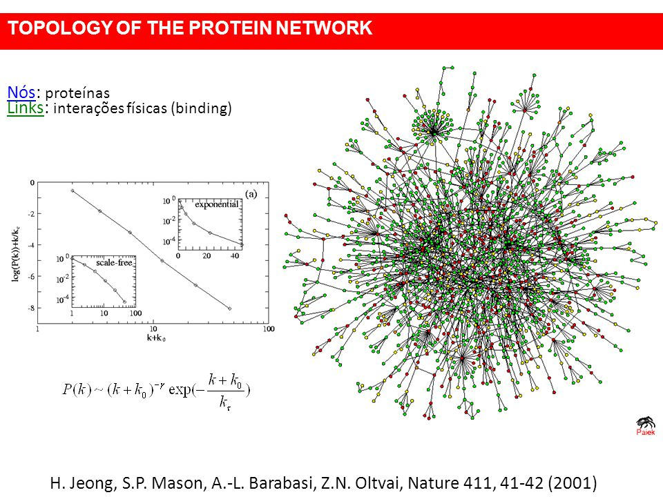 TOPOLOGY OF THE PROTEIN NETWORK