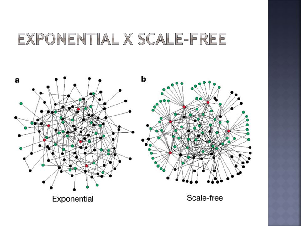 Exponential x Scale-FREE