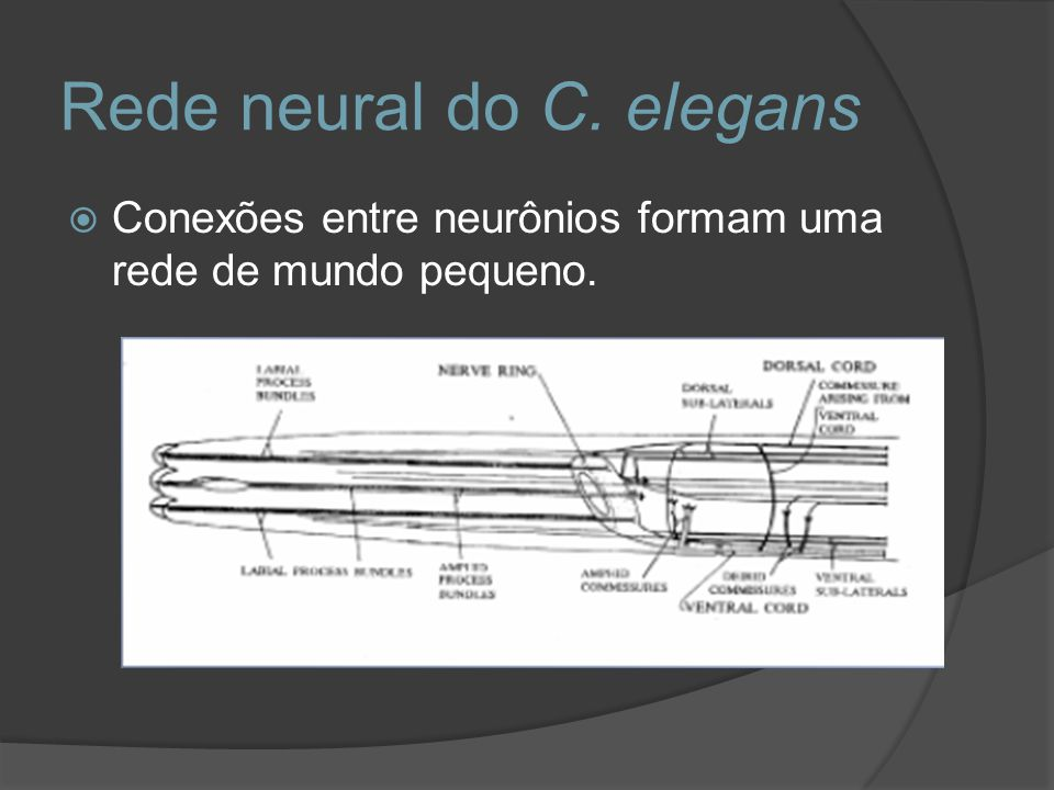 Rede neural do C. elegans