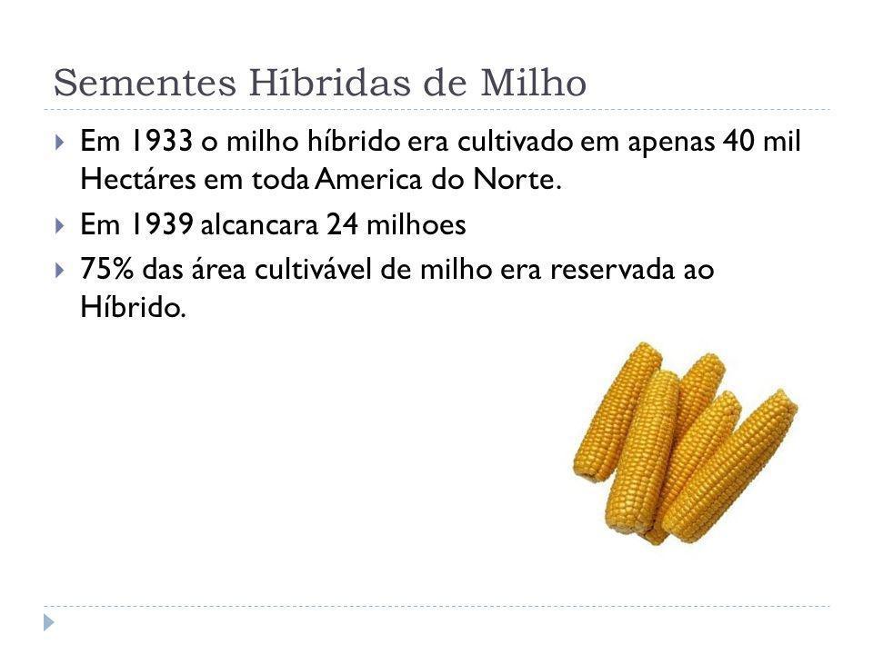 Sementes Híbridas de Milho