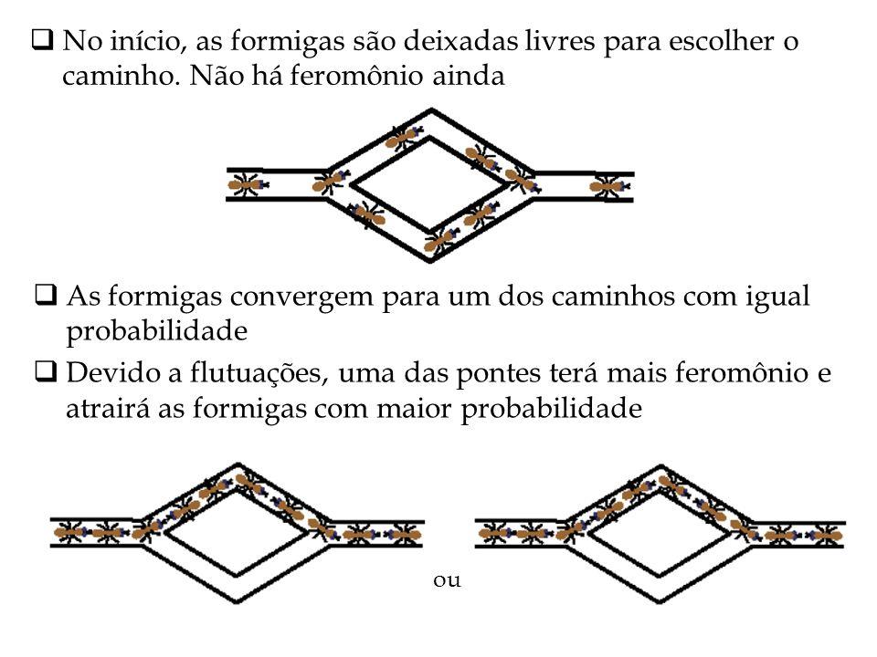 As formigas convergem para um dos caminhos com igual probabilidade