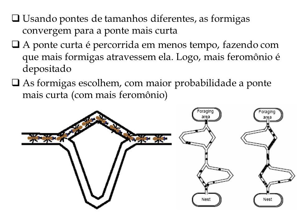 Usando pontes de tamanhos diferentes, as formigas convergem para a ponte mais curta