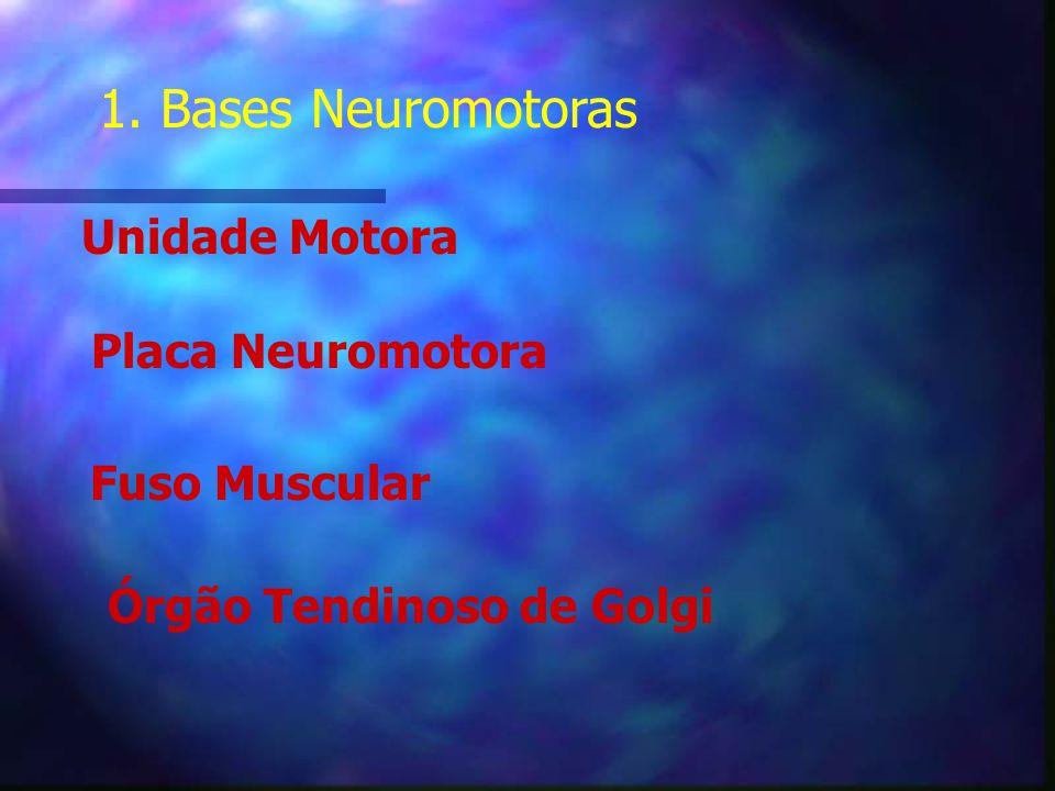 1. Bases Neuromotoras Unidade Motora Placa Neuromotora Fuso Muscular
