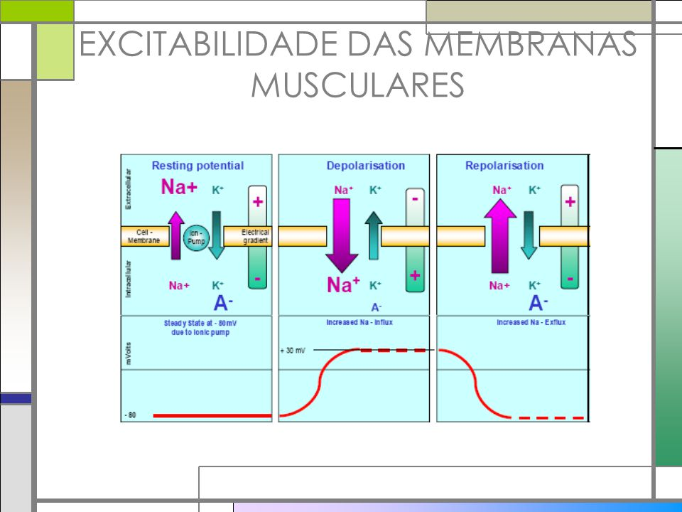 EXCITABILIDADE DAS MEMBRANAS MUSCULARES