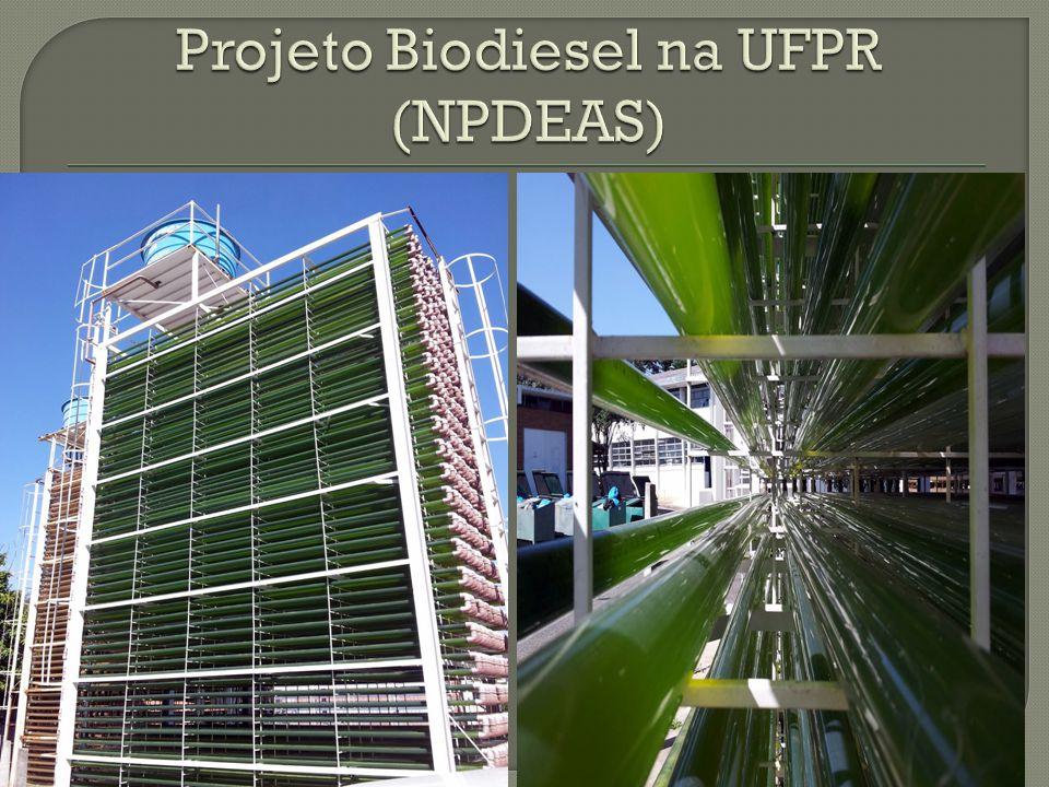 Projeto Biodiesel na UFPR (NPDEAS)