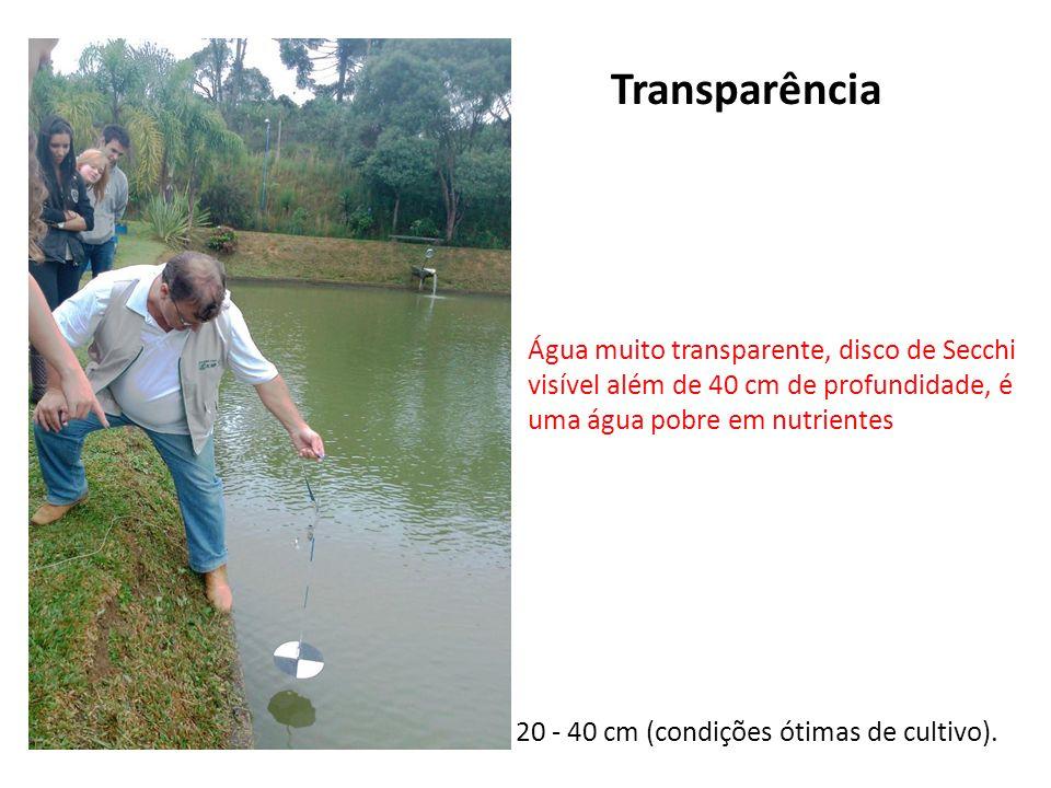 Transparência Água muito transparente, disco de Secchi visível além de 40 cm de profundidade, é uma água pobre em nutrientes.