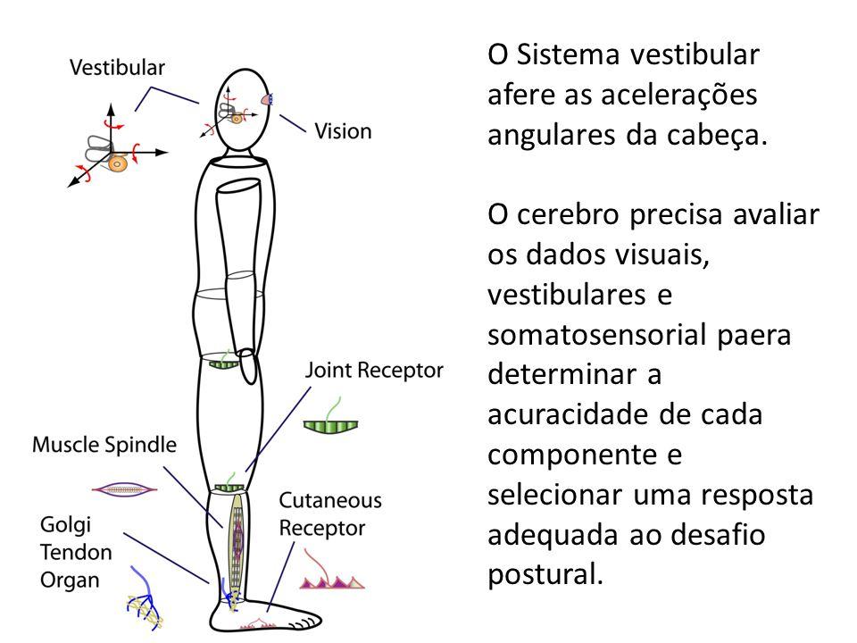 O Sistema vestibular afere as acelerações angulares da cabeça.