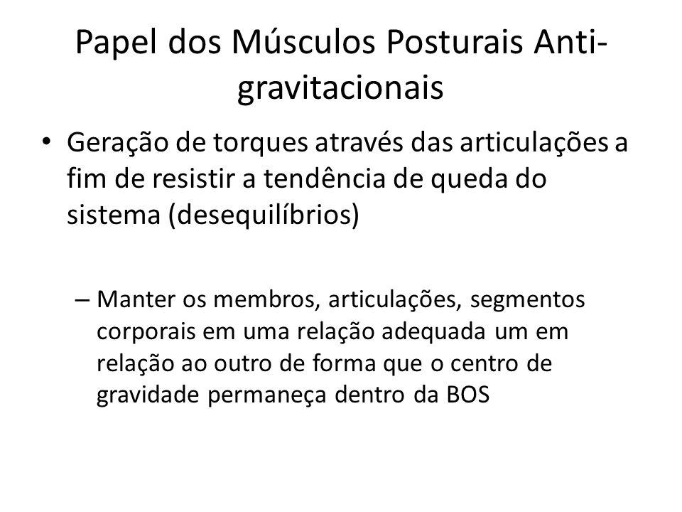 Papel dos Músculos Posturais Anti-gravitacionais