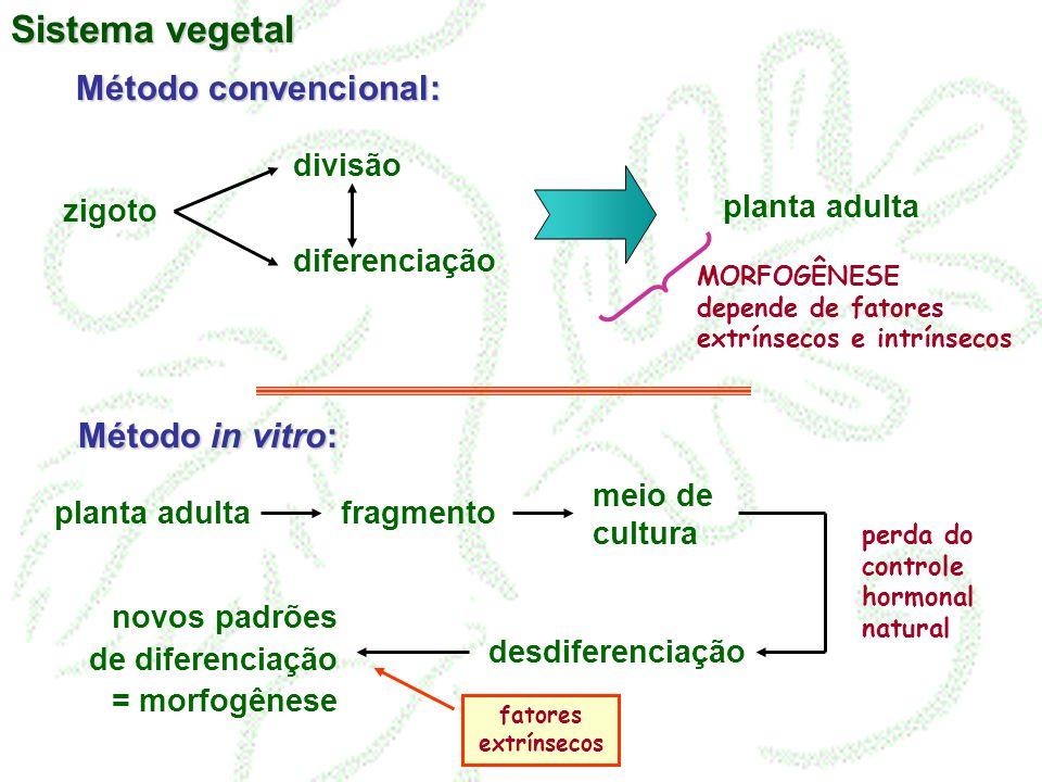 Sistema vegetal Método convencional: Método in vitro: divisão zigoto