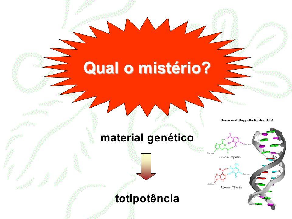 Qual o mistério material genético totipotência