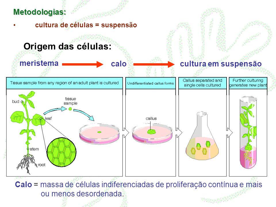 Origem das células: Metodologias: meristema calo cultura em suspensão
