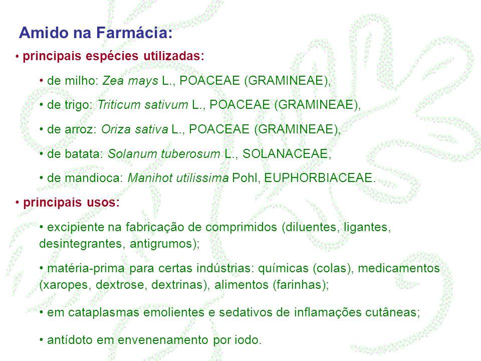 Amido na Farmácia: de milho: Zea mays L., POACEAE (GRAMINEAE),