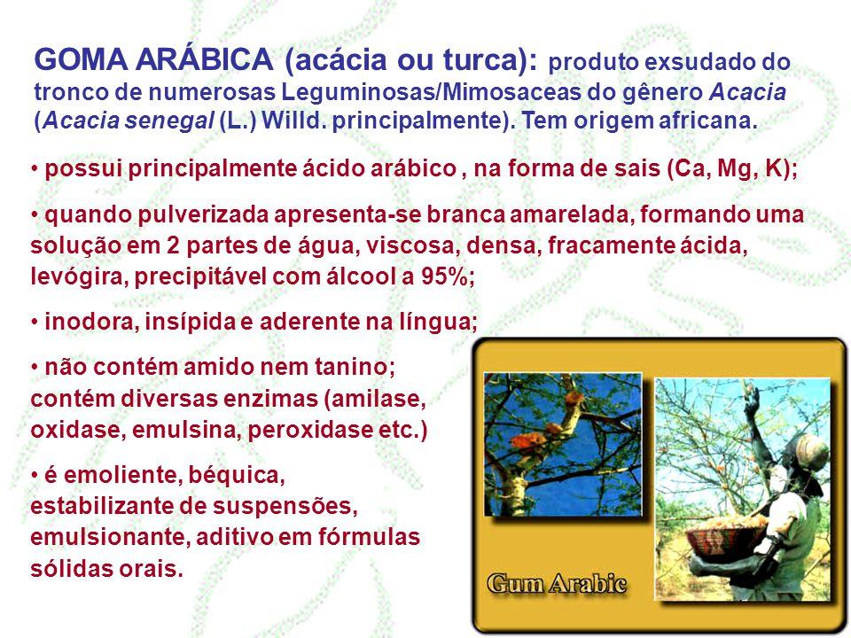 GOMA ARÁBICA (acácia ou turca): produto exsudado do tronco de numerosas Leguminosas/Mimosaceas do gênero Acacia (Acacia senegal (L.) Willd. principalmente). Tem origem africana.