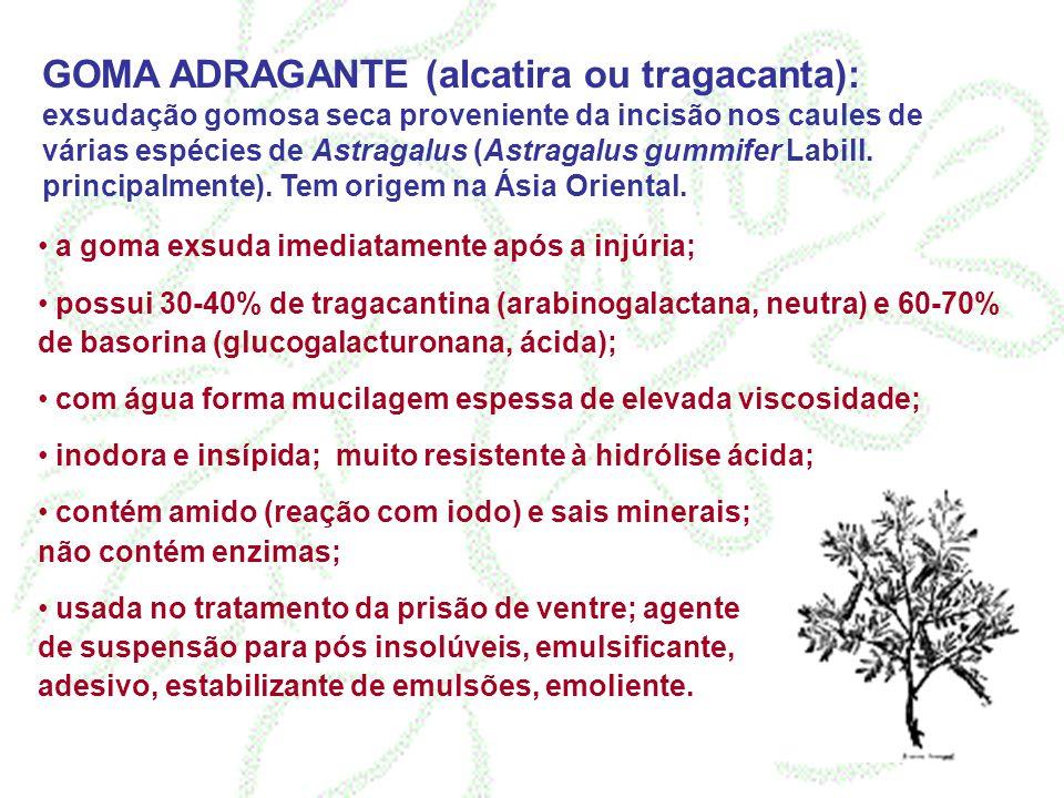 GOMA ADRAGANTE (alcatira ou tragacanta): exsudação gomosa seca proveniente da incisão nos caules de várias espécies de Astragalus (Astragalus gummifer Labill. principalmente). Tem origem na Ásia Oriental.