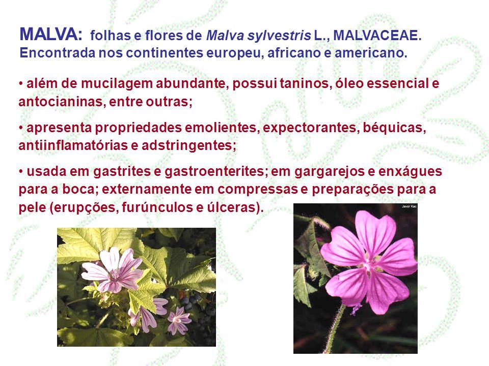 MALVA: folhas e flores de Malva sylvestris L. , MALVACEAE