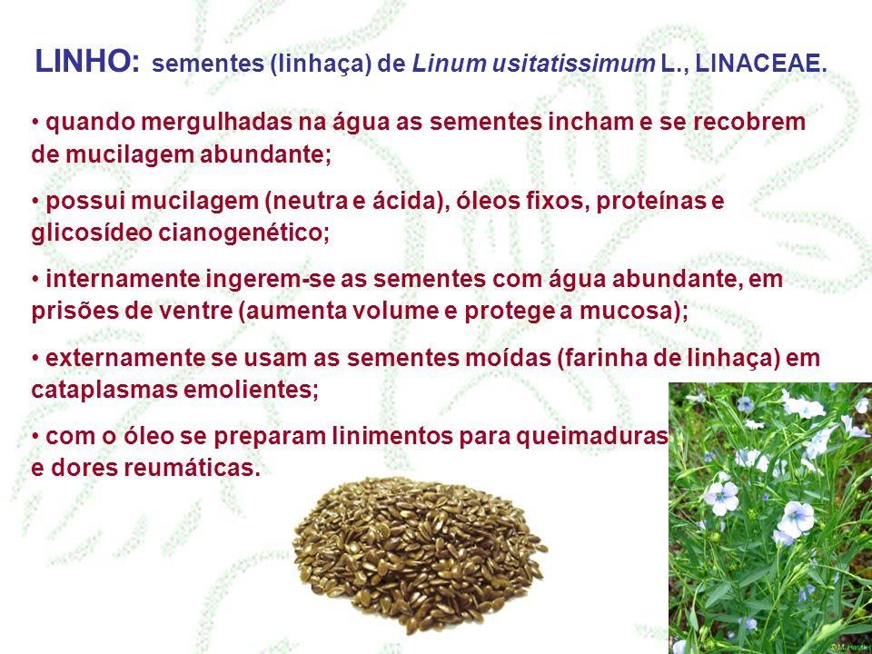 LINHO: sementes (linhaça) de Linum usitatissimum L., LINACEAE.
