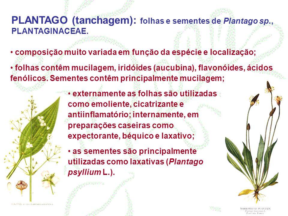 PLANTAGO (tanchagem): folhas e sementes de Plantago sp