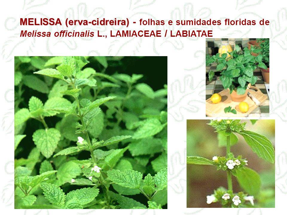 MELISSA (erva-cidreira) - folhas e sumidades floridas de Melissa officinalis L., LAMIACEAE / LABIATAE
