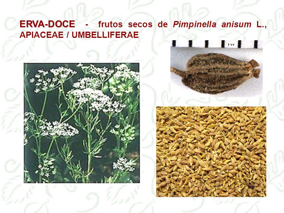 ERVA-DOCE - frutos secos de Pimpinella anisum L