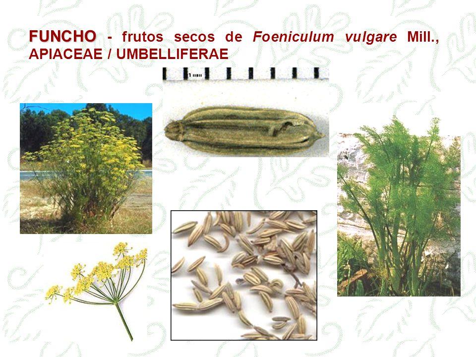FUNCHO - frutos secos de Foeniculum vulgare Mill