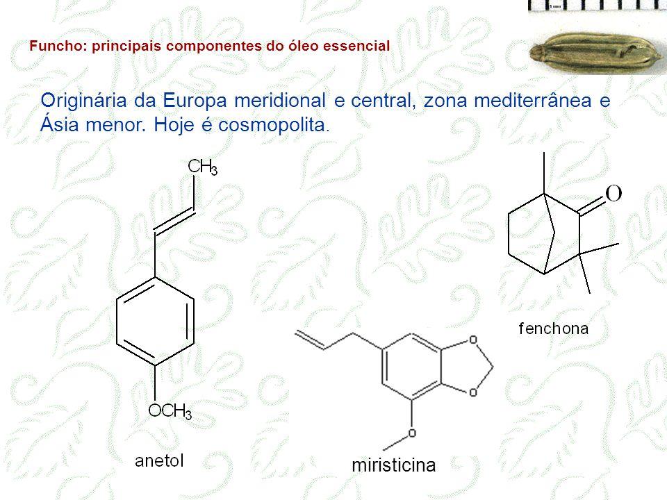 Funcho: principais componentes do óleo essencial