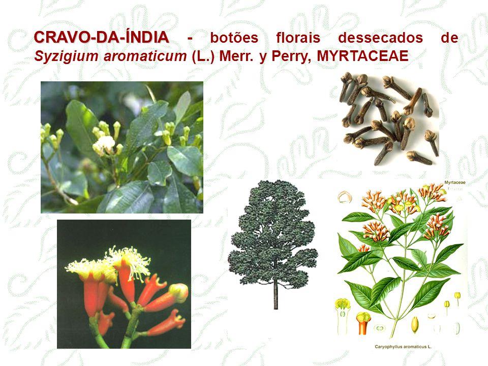 CRAVO-DA-ÍNDIA - botões florais dessecados de Syzigium aromaticum (L