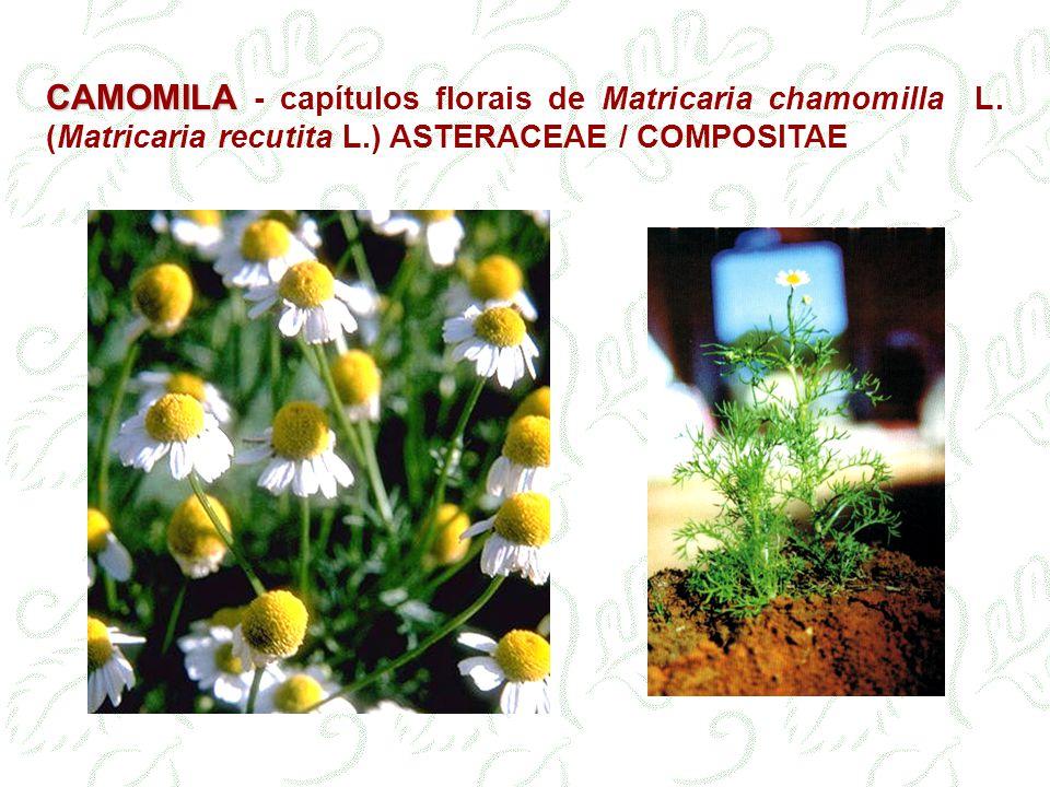 CAMOMILA - capítulos florais de Matricaria chamomilla L