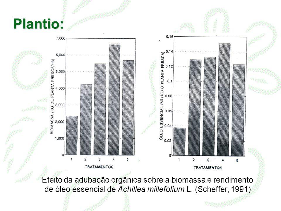 Plantio: Efeito da adubação orgânica sobre a biomassa e rendimento de óleo essencial de Achillea millefolium L.