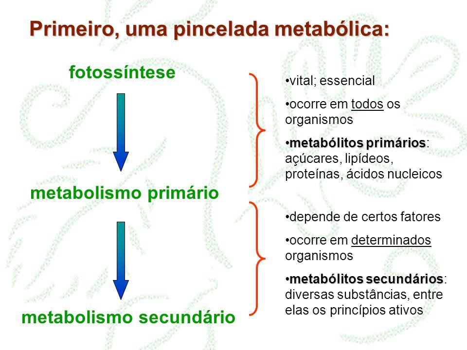 metabolismo secundário