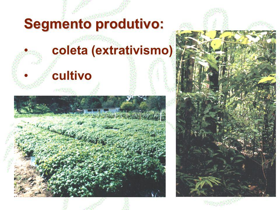 Segmento produtivo: coleta (extrativismo) cultivo